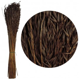Avena Sativa Marron 170 grs