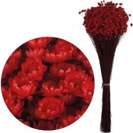 Glixia Rojo 75 gr