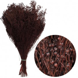Brooms Marron Oscuro 100 grs