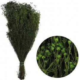 Brooms Verde 100 grs