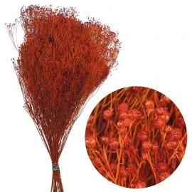 Brooms Naranja Oscuro 100 grs