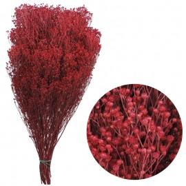 Brooms Fucsia 100 grs