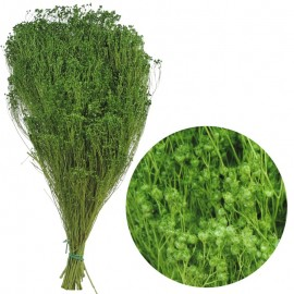 Brooms Verde Claro 200 grs