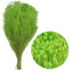 Brooms Verde Manzana 200 grs