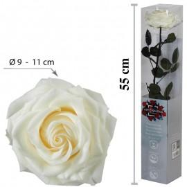 Rosa Premium con Tallo...