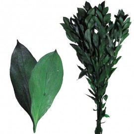Ruscus Natural Pres Verde