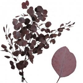 Eucaliptus Populus Rojo...