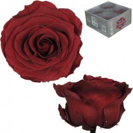 Rosa Premium Burgundy (x4 ud)