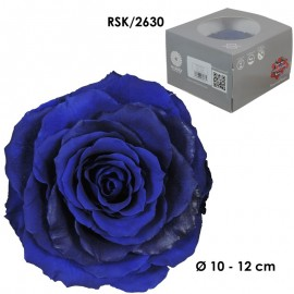 Rosa King Ø 12 cm Azul (1 ud)