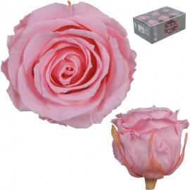 Extra Rosa Ø 6 cm Rosa...