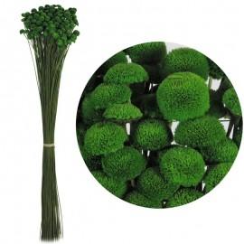 Botao Verde 100 grs