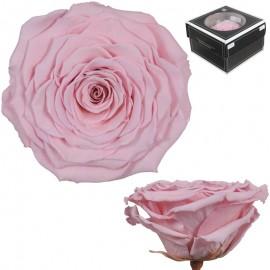 Rosa XXL Rosa Vintage (1 ud)