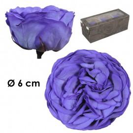Rosa Inglesa XL Violeta (3 ud)