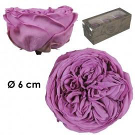 Rosa Inglesa XL Lila Fuerte...
