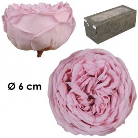 Rosa Inglesa XL Rosa...