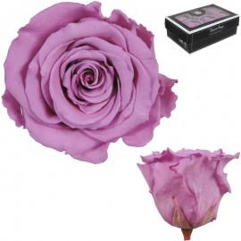 Rosa XL Lila Fuerte (6 Ud)