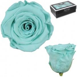 Rosa XL Verde Agua (6 Ud)