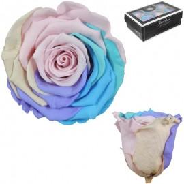 Rosa XL Arcoiris Pastel (6 Ud)