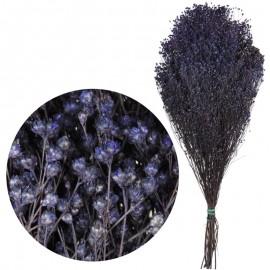 Brooms Morado 100 grs
