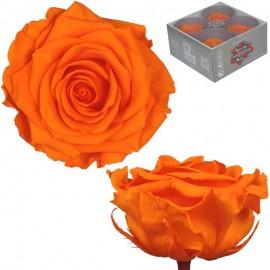 Rosa Premium Naranja (x4 ud)