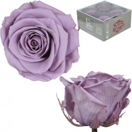 Rosa Premium Lila (x4 ud)