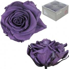 Rosa Premium Purpura (x4 ud)