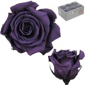 Rosa Estandar Purpura (x6 ud)
