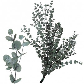 Eucaliptus Gunny Vert Verd.