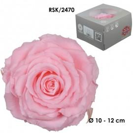 Rosa King Ø 12 cm Bridal...