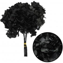 Hortensia Negro Ø 20 cm Pres.