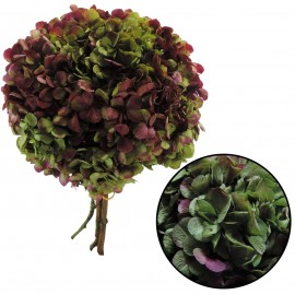 Hortensia Verde / Fucsia Ø...