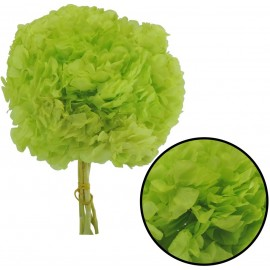 Hortensia Verde Manzana Ø...