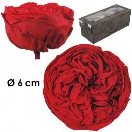 Rosa Inglesa XL Buganvilla...