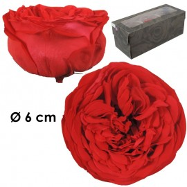 Rosa Inglesa XL Naranja...