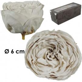 Rosa Inglesa XL Blanco Roto...