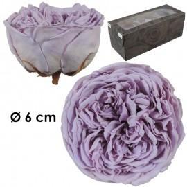 Rosa Inglesa XL Lila (3 ud)