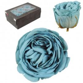 Rosa Inglesa L Celeste 6 Ud