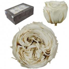 Rosa Inglesa L Blanco Roto...