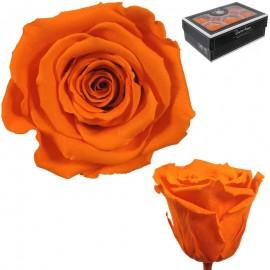 Rosa XL Naranja (6 Ud)