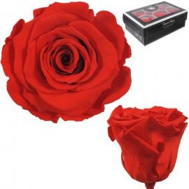 Rosa XL Rojo Anaranjado (6 Ud)