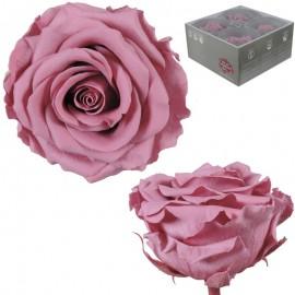 Rosa Premium Cherry Blossom...