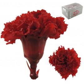 Clavel Rojo Ø 6cm Pres. ( 6...