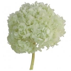 Hortensia Verde Menta Ø 20 cm