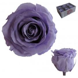Extra Rosa Ø 6 cm Lila (6 uds)
