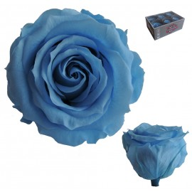 Extra Rosa Ø 6 cm Celeste...