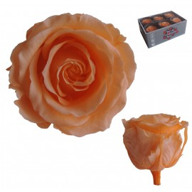 Extra Rosa Ø 6 cm Melocoton...
