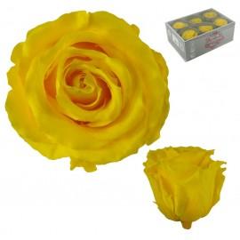 Extra Rosa Ø 6 cm Amarillo...