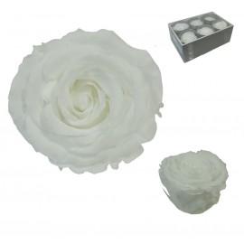 Extra Rosa Ø 6 cm Blanco (6...