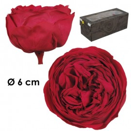 Rosa Inglesa XL Fucsia...