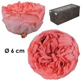 Rosa Inglesa XL Bic. Coral...